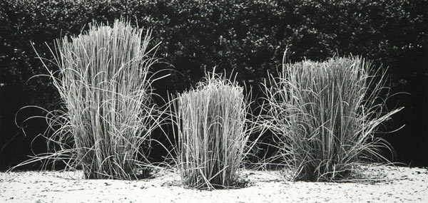 Grass (New York City) by Bruce Zander | ArtworkNetwork.com
