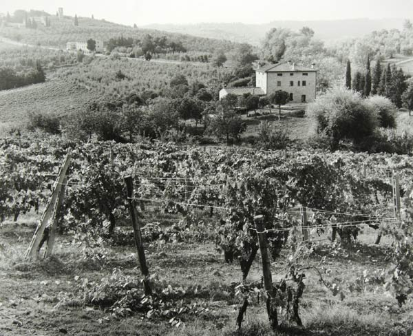 San Gimignano Countryside (Italy) by Bruce Zander | ArtworkNetwork.com
