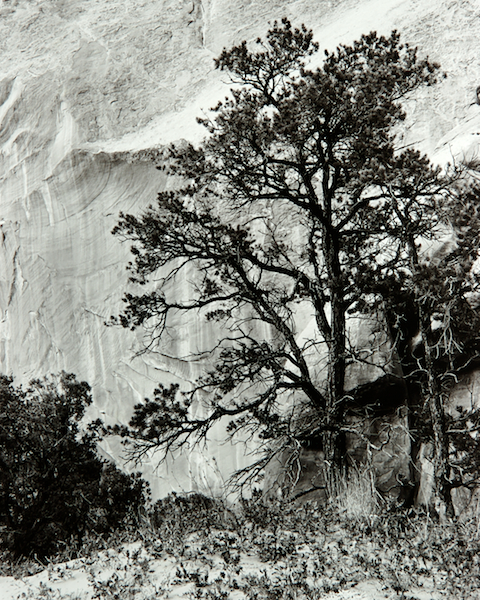 Tree and Rock Face (Utah) by Bruce Zander | ArtworkNetwork.com