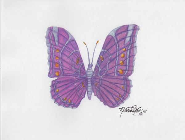 Variegated Butterfly 2 by Nadia Lee | ArtworkNetwork.com