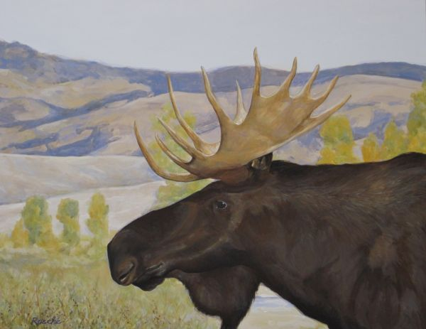 Bull Moose in Grand Tetons National Park by Maggie Rosche | ArtworkNetwork.com
