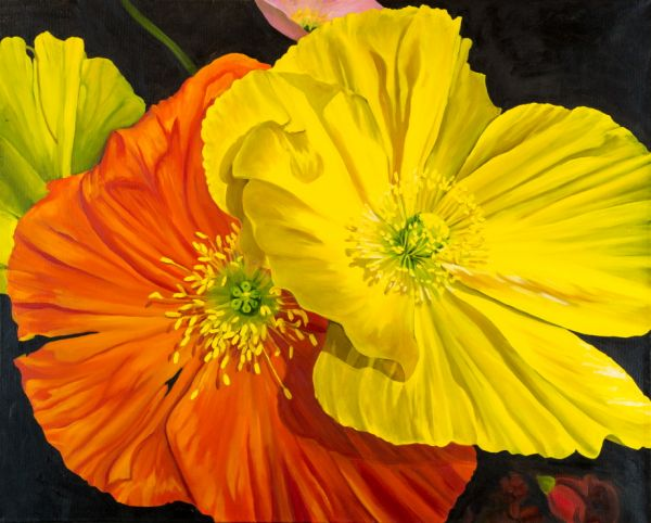 Icelandic Poppies by Amanda Stavast | ArtworkNetwork.com